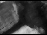 Михаил Калатозов. ЛЕТЯТ ЖУРАВЛИ (Самоубийство). 1957